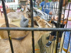 1日動物園が行われました